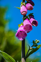 Pink Purple Spotted Wild Bell Flower Pretty Nature Digital Art Image Pho... - $2.00
