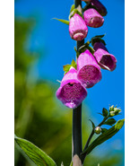 Pink Purple Spotted Wild Bell Flower Pretty Nature Digital Art Image Photograph  - $2.00