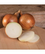 Talon Organic Onion Seed , Vegetable Seeds,Ship From US - $18.00