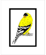 Goldfinch Pen and Ink Print - $29.00
