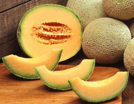 Hale's Best Jumbo Cantaloupe Seed - Large Oval Sweet Melons Seeds (3gr t... - $4.45+