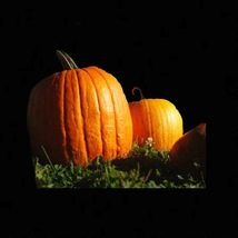 SHIP FROM US PUMPKIN BIG MAX 10 SEEDS PRIZE WINNING GIANT HEIRLOOM TGV1 - $11.56
