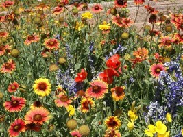 SHIP FROM US 4,500 Dry Area Wildflower Mix Seeds, ZG09 - $19.96