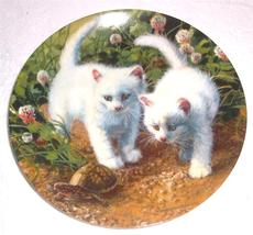 """A Chance Meeting: White American Shorthairs"" Cat Plate  Amy Brackenbury... - £46.79 GBP"