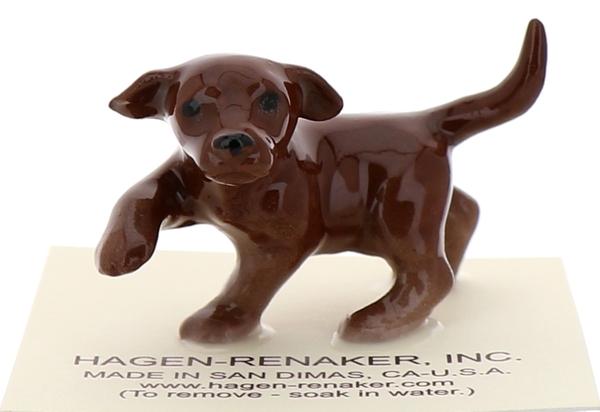 Chocolate lab pup1