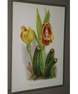 Lindenia Orchid Print Limited Edition Anguloa Ruckeri Collector Wall Art... - $12.34