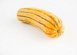 Squash Winter Delicata Non GMO Heirloom Garden Vegetable Seeds Sow No GMO® USA - $2.96+