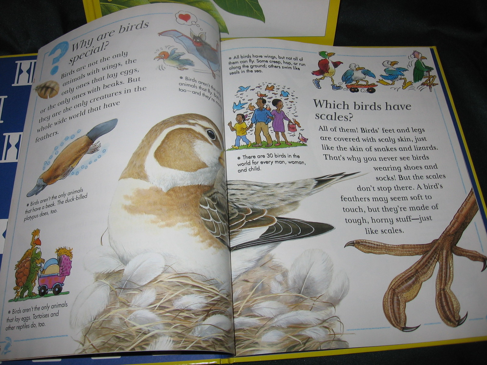 3 I Wonder Why Reader's Digest Science Series Penguins, Butterflies, Sea