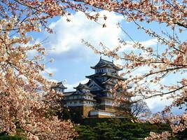 Japan Himeji Castle Hilltop Sakura flowers 32x2... - $13.95