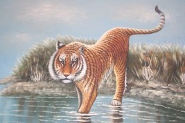 Rare Bengal Tiger Large Canvas Oil Painting By Mcdonald - $865.55