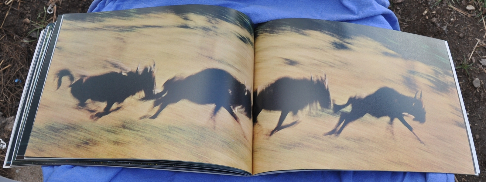 VINTAGE Bk- The Creation - Ernest Haas- Nature Photography interpreting Creation