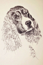 English Springer Spaniel Dog Art Gift #129 Signed Kline Drawing from Wor... - $49.95