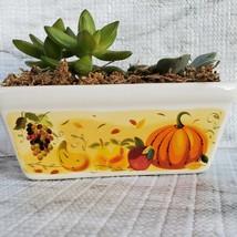 Fall Succulent Dish Garden in vintage harvest loaf pan, Ceramic pumpkin planter image 2