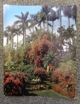 Vintage Uncirculated Florida Sunken Gardens St Petersburg Souvenir Postcard - $24.47