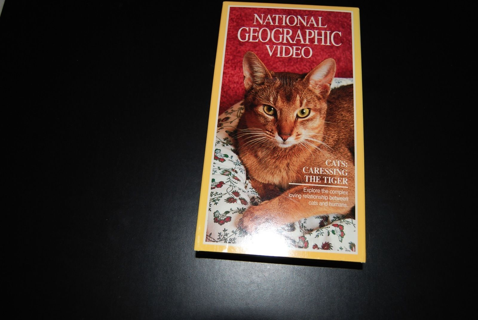 Primary image for National Geographic Video - Cats: Caressing the Tiger (VHS, 1992)
