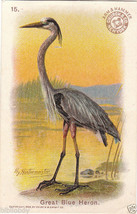 Arm & Hammer Victorian Tradecard Dated 1908 with Artist Name, Bird Series - $12.80