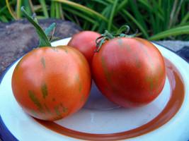 Amurskiy Tigr - a striped tomato from Russia - $4.00