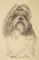 Shih Tzu Signed Dog Art Print #49 Kline adds yo... - $74.25