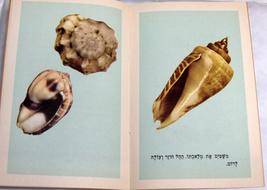Israeliana Vintage Hebrew Children Book Mount Edom Shell Legend Judaica 1950's image 5