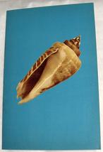 Israeliana Vintage Hebrew Children Book Mount Edom Shell Legend Judaica 1950's image 6