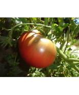 Organic Tomato Cherokee Purple (Heirloom) Hot Climates - $2.96
