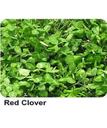 Organic Red Clover NUTRITIOUS Sprouting Seeds. - $3.95