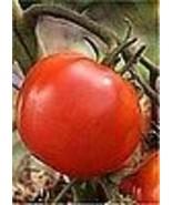 Organic Thessaloniki Tomato Seeds - Hot Climate! - $2.96