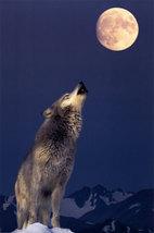 2400 1339 gray wolf howling at moon posters thumb200