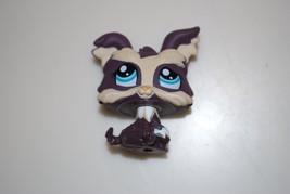 Littlest Pet Shop #1473 Dark Purple & Cream Yorkie Puppy Dog With Blue Eyes - $14.95