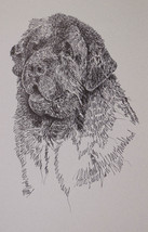 Newfoundland Dog Art Lithograph #34 Kline will draw your dogs name free.... - $49.95