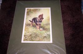 German Shepherd Print - Signed & Numbered - $40.00