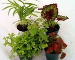 6 Potted Assorted Fairy Garden Plants and FREE Shipping!!!
