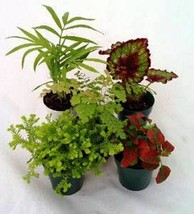 6 Potted Assorted Fairy Garden Plants and FREE Shipping!!! - $19.99