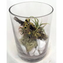 "Air Plant Terrium Kit with ""FREE"" Shipping!!! - $19.99"