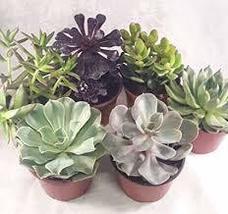 Succulents Unique Succulent 4'' pot (Collection of 3) unique from Jmbamboo - $25.47
