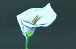 "Akimova: CALLA LILY, flower, spring, colored pencils,   5.5""x8.5"" - $7.00"