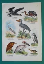 OUR BIRDS Pelican Egret Heron Albatross Cormorant - Charming COLOR Litho... - $16.65