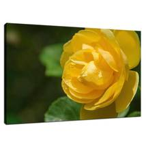 An item in the Art category: Friendship Rose Floral Nature Photo Fine Art Canvas & Unframed Wall Art Prints