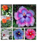 NEW! 100pcs Rare 5 Colors Hibiscus  Fragrant Seeds Garden&Home Perennial... - $1.99