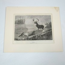 """Antique 1800s Print """"Surprised"""" Arthur Fitzwilliam Tait Lake Deer Stag &... - $29.99"""