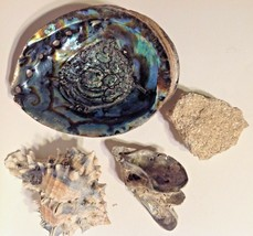 Seashells 4 Genuine Blue Green Abalone Clam Coral - $17.82