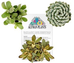 Altman Plants Assorted Fuzzy Succulents Collection Fun Textures (3.5"