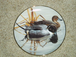 Hamilton American Waterbirds by Rod Lawerance PINTAILS - $10.99