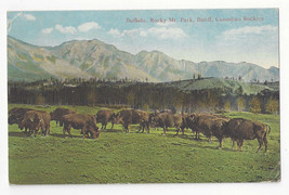 Canada Banff Rocky Mountain Park Buffalo Canadian Rockies Vtg Postcard 1921 - $6.36