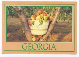 Georgia Peaches 1993 Steve Yost Postcard 4X6 Peach Basket - $6.36