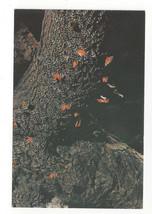 Greece Rhodes Butterflies Papillons Rabble of Butterflies Vtg Postcard 4X6 - $4.74