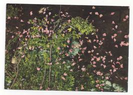 Greece Rhodes Butterflies Papillons Vtg Postcard 4X6 - $4.74