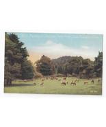 San Francisco CA Golden Gate Park Elk Paddock Vntg PNC Postcard S.F. 128 - $11.40