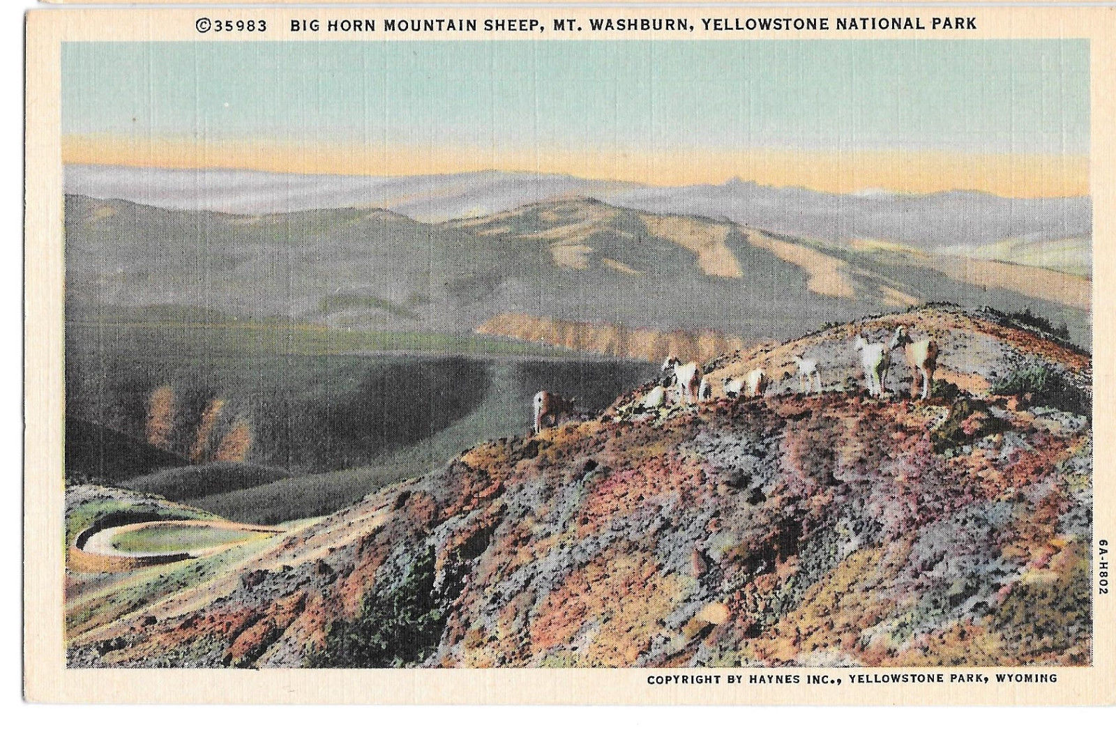 WY Yellowstone Big Horn Mountain Sheep Mt Washburn Vtg Haynes Linen Postcard