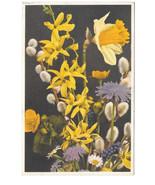 Forsythia Narcissus Pussy Willow Vtg Stehli Spring Flower Postcard Switz... - $7.56